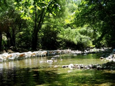 Misi Köyü Piknik Alanı