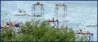 Uluabat Kuş Cenneti Milli Parkı